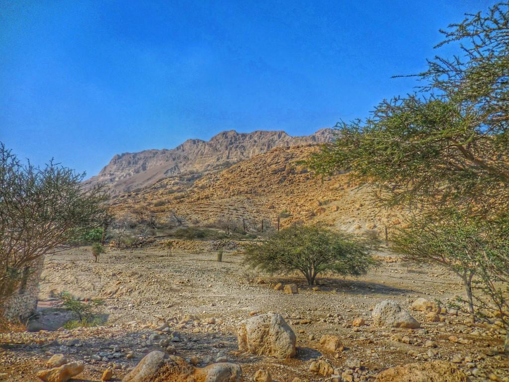 En Gedi Desert 1